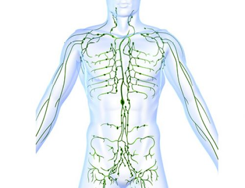 A sluggish Lymphatic System can hinder weight loss efforts!