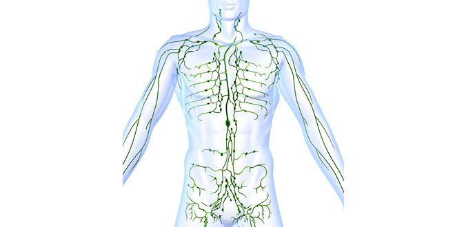 A Sluggish Lymphatic System Can Hinder Weight Loss Efforts Cabot