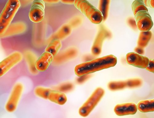 You Need To Know About Saccharomyces Boulardii!