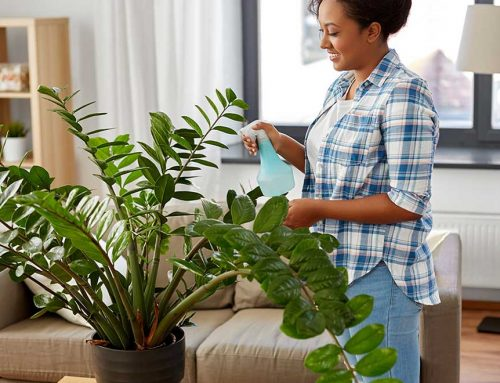 Can Houseplants Improve Your Health?